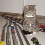 Modellbahn mit Katze